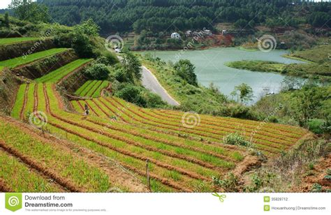 Green vegetable terrace garden and pine jungle stock photo image 35828712