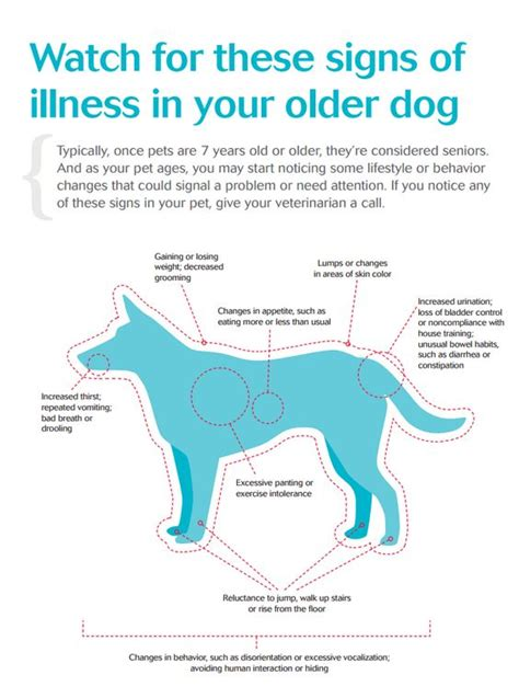 Liver Detoxes That Wont Take Out Regular Medication by 9 Ways To Take Care Of Aging Dogs Paw Castle