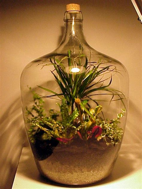 sealed bottle garden 417 best terrarium images on pinterest plants