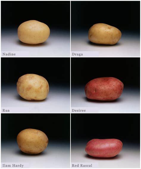 red potatoes varieties