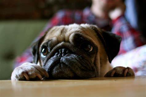 pug math pug slope 187 archive 187 the world is sid s bolster