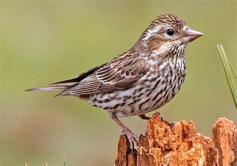 nw bird species pacific northwest birds