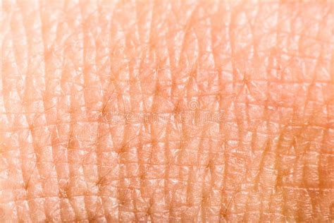 macro of clean healthy texture human skin stock photo 497410486 up human skin macro epidermis stock photo image of anatomy freckles 36429390