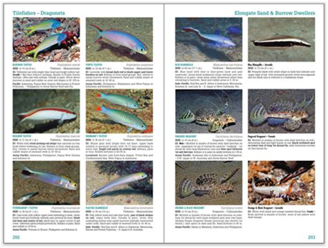Pdf Reef Fish Identification Tropical Pacific second edition of reef fish identification tropical pacific