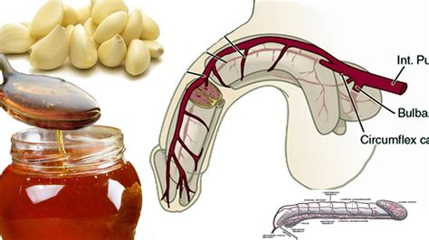 Why Garlic and Honey Good for Men? Garlic Health Benefits