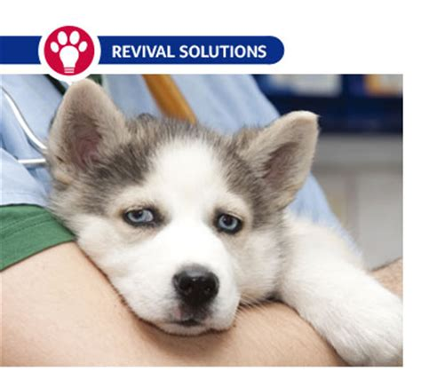 brucellosis in dogs brucellosis in dogs