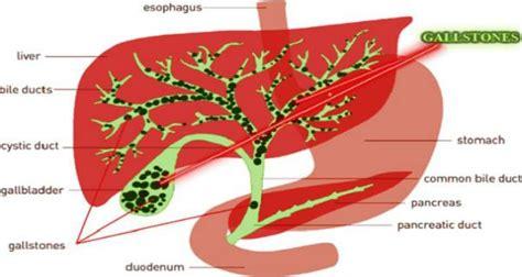 Shoulder Liver Detox by 1000 Images About Healthy Healthy Mind On