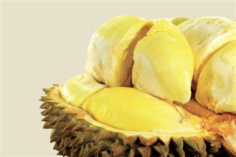 Jual Bibit Durian Berbagai Jenismusangkingpetruklaynamlungdll Jual Bibit Durian Berbagai Jenis Berkualitas Informasi