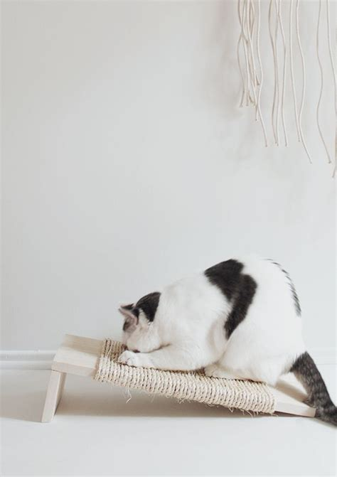 Kuas Cat Cisal 25 best 25 scratching post ideas on cat scratching post diy cat scratching post and