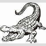 Alligator Mouth Open Drawing | 736 x 652 jpeg 80kB