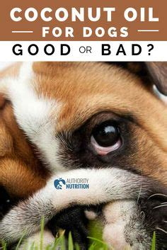 coconut bad for dogs 1000 images about is this food or bad on articles health and what
