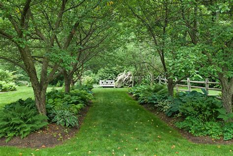 what trees to plant in backyard triyae com backyard trees for shade various design