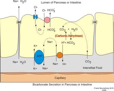 Fluids And Secretions