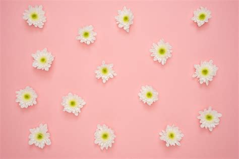 flower background 1000 great flower background photos 183 pexels 183 free stock
