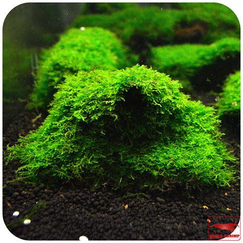 Sind Pilze Im Garten Schädlich by Moos Auf Dachziegeln Sicher Entfernen So Entfernen Sie