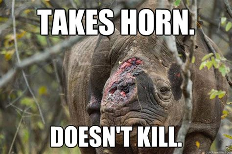 Rhino Memes - takes horn doesn t kill wtf rhino quickmeme