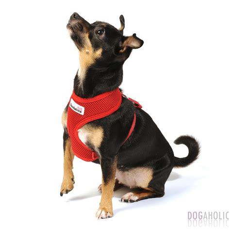 doodlebug harness doodlebone airmesh harness in teal dogaholic