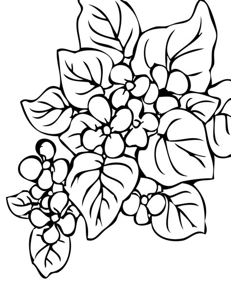 coloring pages plants flowers trees begonia coloring page handipoints