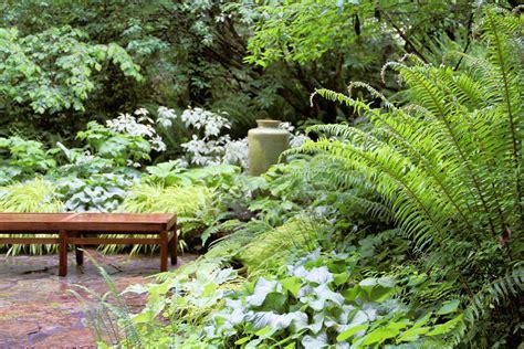 Pacific Northwest Garden Ideas Best Ferns To Plant Sunset