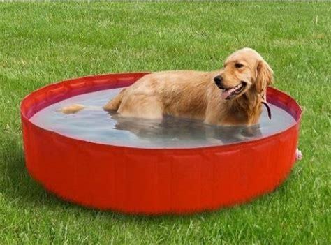 vasca lavaggio cani piscina cani vasca per cani piscina per cani piscina
