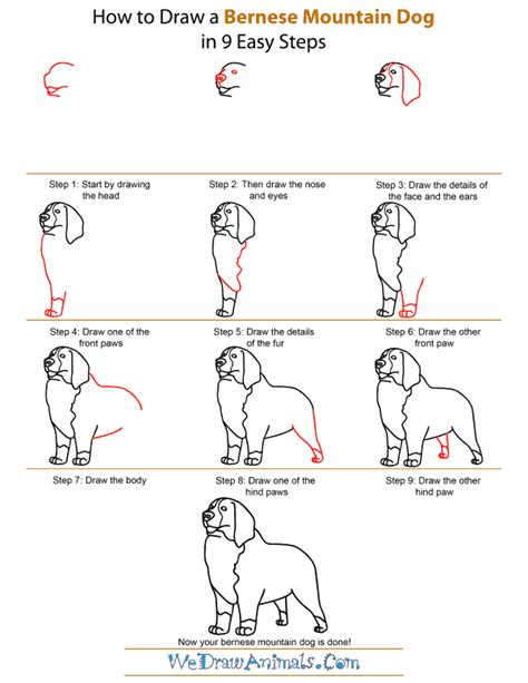 how to a bernese mountain how to draw a bernese mountain