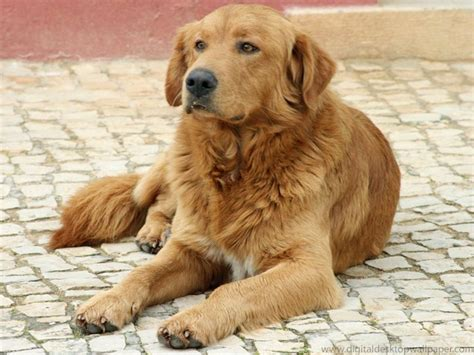 breed lifespan 10 breeds with the spans and fur