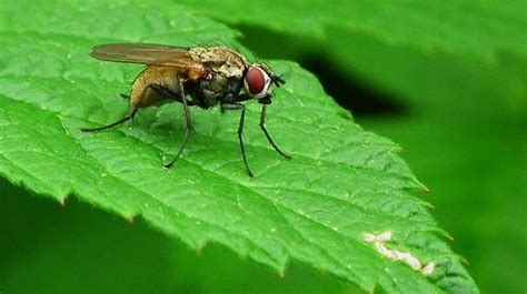 ultimate tips on how to get rid of flies inside and