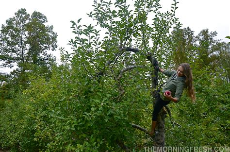 triple aught design valkyrie hoodie the ultimate jacket review of triple aught design s