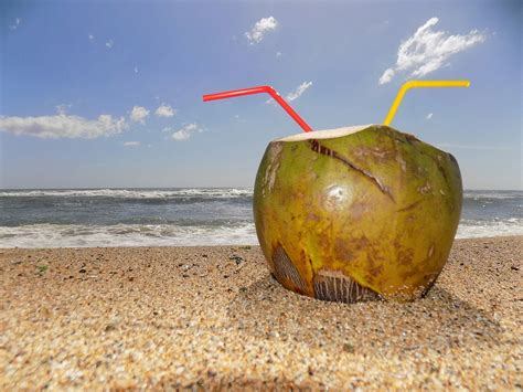 coco xxi the breeze benefits of coconut water the sleuth journal