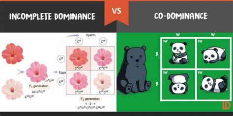 incomplete dominance definition www pixshark com