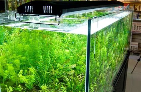 aquarium t5 beleuchtung aliexpress buy odyssea 4 t5ho lighting with