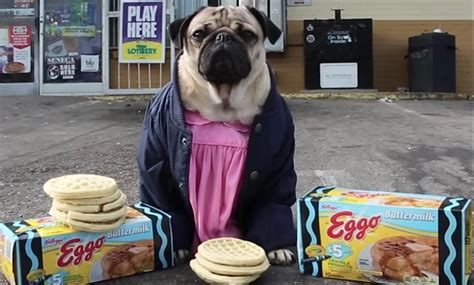 pugs dressed as things things fan this pug dressed up as all the characters in netflix