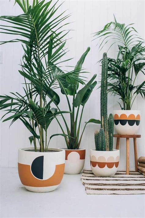 Tolle Zimmerpflanzen by Tolle Zimmerpalmen Pflanzenfreude De Products