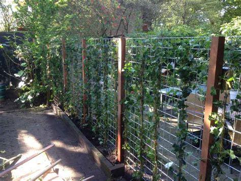beukenhaag compleet losse planten tegen gaas en palen heijboertuinhout