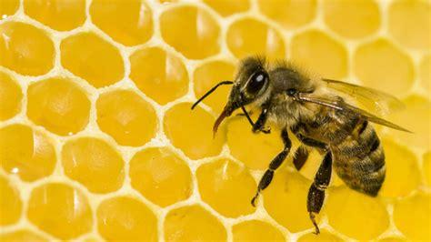 Neonicotinoids Bee Blight Bloomberg