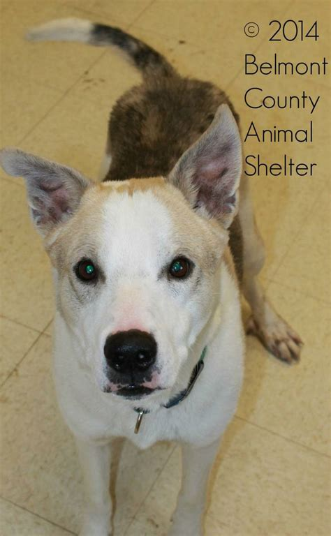 richland county pound 17 best images about don t shop adopt on pit bull mix pit bull