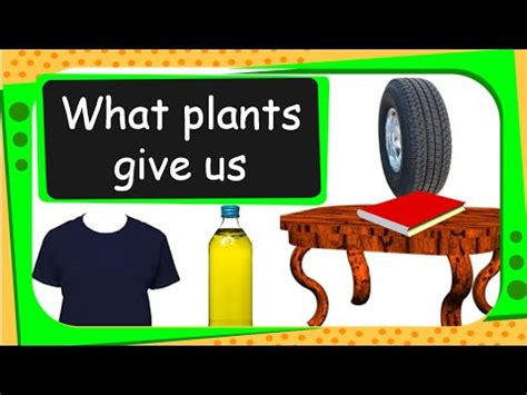 5 uses for products science uses of plants