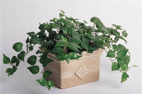 indoor plant topsoil for indoor potted plants