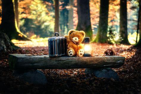 full hd video teddy bear teddy bear wallpapers hd 1080p hd wallpapers images
