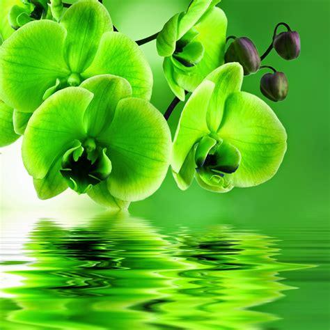 imagenes lindas wallpaper imagenes fotograficas imagenes bonitas de flores para