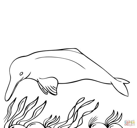 dolphin coloring page pdf interesting dolphin coloring pages dolphins free and