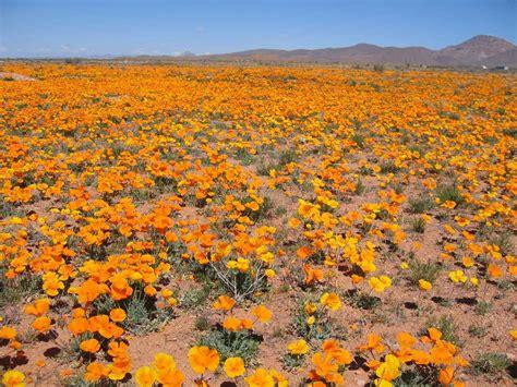 desert flowers plants animals and communites world grand tour