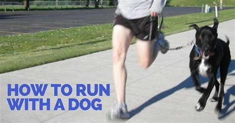 how far can dogs run how to run with a thatmutt