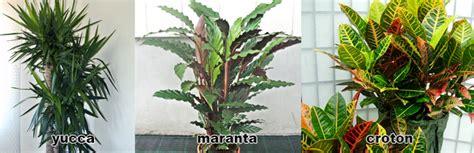 nomi piante appartamento piante da appartamento nomi e variet 224