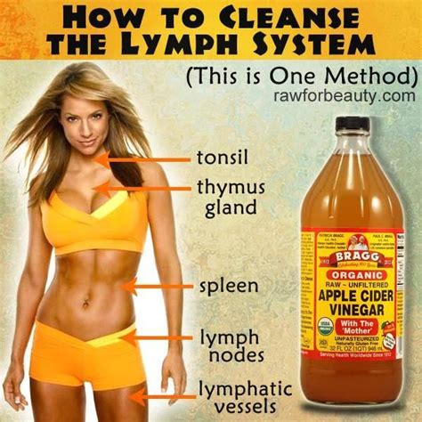 Will Chia Seeds And Honey Detox Your Lymphatic System by 25 Best Ideas About Lymph Nodes On Lymph