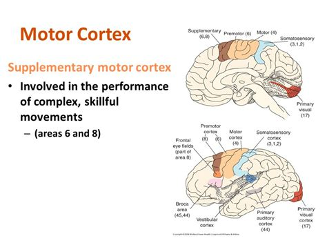 motor functions disorders of motor function ppt