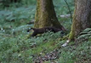 Has Been Spotted by Pine Marten Spotted In Shropshire For Time