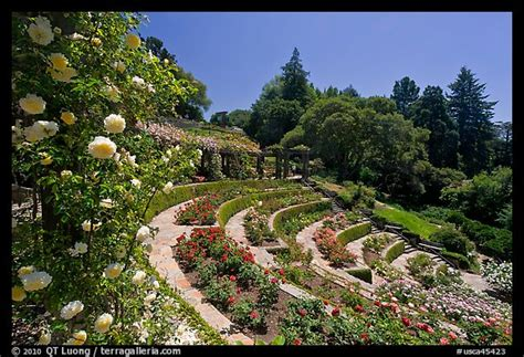 Berkeley Garden by Picture Photo Municipal Garden Berkeley California Usa