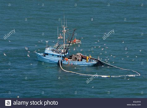 boat seine net anchovy fishing with net purse seine in a circle from