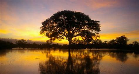 beleza da natureza fotos e imagens sabedoria 7 frases sobre a natureza e a vida xapuri info